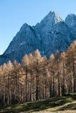 Legno di Alpe Immagini Stock