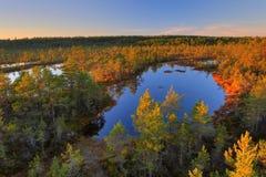 Legno di autunno Fotografie Stock Libere da Diritti