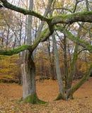 Legno di autunno fotografie stock