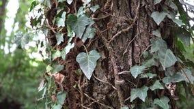 Legno di autunno, foresta in anticipo dell'autunno nel giorno soleggiato archivi video