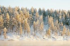 Legno di conifere congelato coperto di neve Fotografie Stock