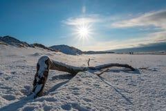Legno di galleggiamento alla spiaggia coperta in neve Immagine Stock