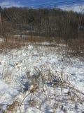 Legno di inverni Fotografia Stock Libera da Diritti