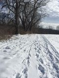 Legno di inverni Immagini Stock