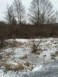 Legno di inverni Fotografie Stock