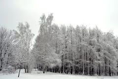 Legno di inverno Fotografie Stock Libere da Diritti