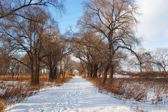 Legno di inverno Fotografie Stock