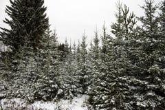 Legno di inverno Immagini Stock
