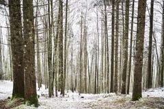 Legno di inverno Fotografia Stock Libera da Diritti
