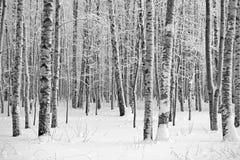 Legno di inverno, foto in bianco e nero immagine stock