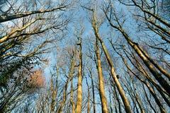 Legno di inverno, Inghilterra Immagini Stock Libere da Diritti