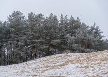 Legno di inverno nella neve e molte piste nella sabbia Fotografia Stock Libera da Diritti