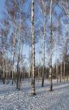 Legno di mattina di inverno Immagini Stock Libere da Diritti