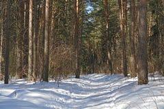 Legno di pino. Immagini Stock
