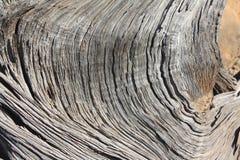 Legno di pino del pignone fotografie stock libere da diritti