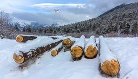 Legno di Snowy Fotografie Stock