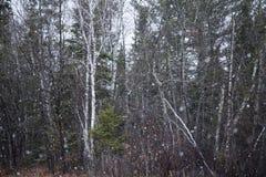 Legno di Snowy Fotografia Stock Libera da Diritti