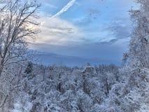 Legno di Snowy della Pensilvania Fotografia Stock