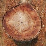 legno di taglio immagine stock libera da diritti