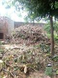 Legno di taglio in un villaggio Immagine Stock Libera da Diritti