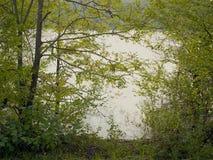 Legno di verde dell'alta marea di fonte Immagini Stock Libere da Diritti