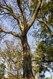 Legno di verde della natura degli alberi Immagini Stock Libere da Diritti
