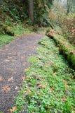 Legno di verde di Forest Trail Wet Gravel Lush della pioggia fotografia stock