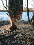 Legno distrutto, vicino al lago fotografia stock libera da diritti