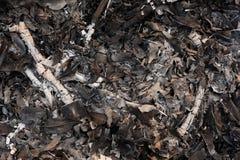 Legno e cenere delle foglie Immagine Stock Libera da Diritti