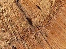 Legno e formiche Immagine Stock Libera da Diritti