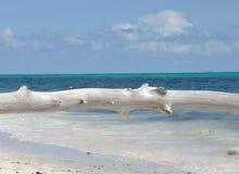 Legno e mare delle Seychelles Immagini Stock Libere da Diritti
