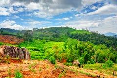 Legno e montagne verde intenso scenici alla provincia di Dak Lak Immagine Stock