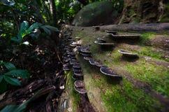 Legno e moos in Pha Hin Koob, Khau Soi Daw, Chanthaburi, Tailandia Immagine Stock