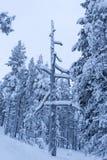 Legno in Finlandia del nord durante l'inverno Fotografia Stock Libera da Diritti