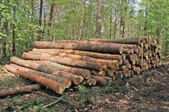 Legno in foresta Fotografia Stock Libera da Diritti