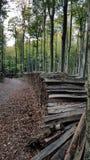 Legno in foresta Immagini Stock