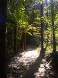 Legno in foreste immagine stock