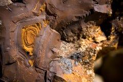 Legno fossilizzato Fotografia Stock Libera da Diritti