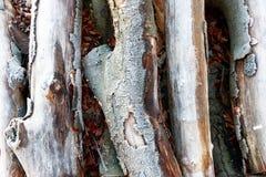 Legno gelido in Richmond Park immagini stock