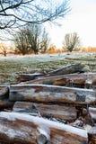 Legno gelido in Richmond Park fotografie stock