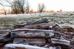 Legno gelido in Richmond Park fotografia stock libera da diritti