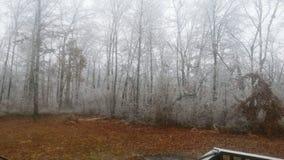 Legno ghiacciato e giorno nebbioso Immagini Stock