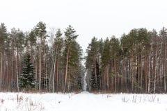 Legno glassato di inverno Fotografie Stock Libere da Diritti