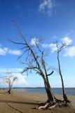 Legno guasto sulla spiaggia Fotografia Stock