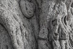 Legno impacciato del primo piano del tronco vecchio Fondo naturalmente grigio Immagine Stock