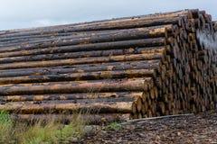 Legno impilato su un'iarda di deposito di legname immagine stock libera da diritti