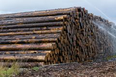 Legno impilato su un'iarda di deposito di legname immagine stock