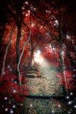 Legno incantato Fotografie Stock