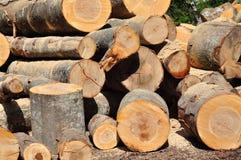 Legno in legno Immagine Stock Libera da Diritti