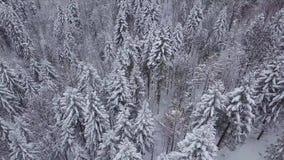 Legno magico con gli alberi nevosi video d archivio